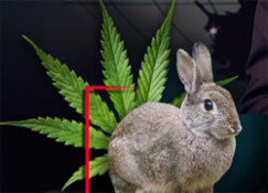 Wabbits on weed, larry wilmore