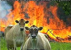 Farting Cows Cause Methane Gas Explosion On German Dairy Farm