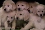 Puppies Predict Super Bowl 2014 Winner Jimmy Fallon