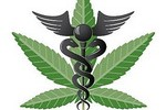 Marijuana New, Safe Wonder Drug! Cholesterol,Weight Loss, Sugar & Carb Metabolism. Lawrence O