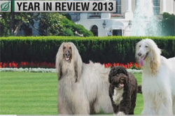 onion year in review 2013