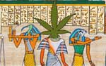 420 egyptian pot head