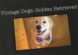 buy vintage dogs