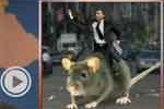 riding rats in Manhattan after Sandy