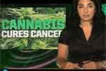 Julianna Forlano and Absurdity Today! Pot cures cancer