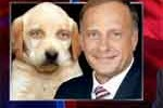 Dogs smarter than GOP steve king 